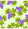 grape seamless pattern vector image