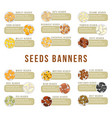cards or banners header with seeds kernels food vector image vector image