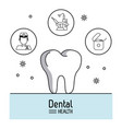 dental care infographic vector image