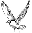 drawing seagull vector image vector image