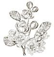 Hand Drawn Flower Sketch vector image vector image