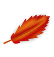 red leaf icon realistic style vector image vector image