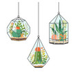 tropical house plants and cactus in hanging vector image vector image