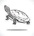 turtle 3 vector image vector image