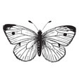 cabbage butterfly vintage vector image vector image