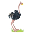 Funny surprising ostrich vector image vector image