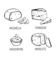 mozzarella cheese and parmesan mimolette sketches vector image