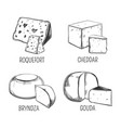 bryndza and roquefort cheddar and gouda cheese vector image