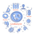 concept bacteria and viruses - leukocyte vector image vector image