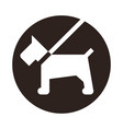 dog on a leash icon vector image