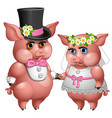 marriage bride and groom pigs in wedding suits vector image