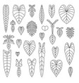 philodendron species leaf line icons set vector image vector image