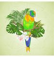 sun conure parrot tropical bird vector image