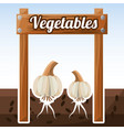 vegetables garlic growth fresh image vector image