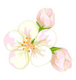 white flowers on white background vector image vector image