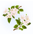 branches of apple tree with flowers set first vector image vector image