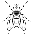 Doodle hand drawn fly vector image vector image