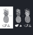 hand drawn pineapple fruits sketch set vector image vector image