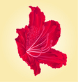 Red flower simple rhododendron Mountain vector image