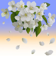 White apple flowers with leaves and bud vector image vector image