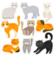 cat set of flat cartoon icons vector image