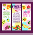 fruits banners vector image vector image