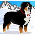 bernes mountain dog lifesaver in mountains vector image vector image