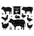 butcher diagrams animal meat cuts cow pig rabbit vector image vector image