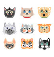 set cute cartoon cats heads colorful character vector image vector image