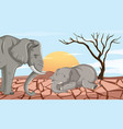 two elephants dying in drought land vector image