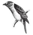 kirombo vintage vector image vector image