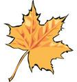 maple leaf icon canada vector image vector image