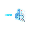 medical banner kidneys magnifying glass biology vector image
