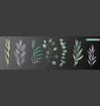 realistic eucalyptus set vector image vector image