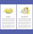 boxfish and butterfly fish isolated on white icons vector image vector image