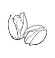 two pistachio nuts hand drawn isolated sketch vector image vector image