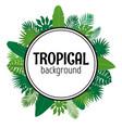 tropical leaves background summer design vector image