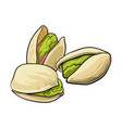 group of pistachio nuts shelled and unshelled vector image vector image