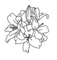 lily flowers digital sketch flower vector image