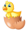 little chick comes of of egg vector image vector image