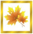 Maple Leaf Golden Autumn vector image