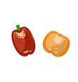 paprika collection pepper vector image vector image
