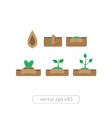 Young plant life process icons set vector image vector image