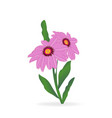 gerbera daisy flower vector image