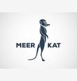 meerkat logo icon design vector image vector image