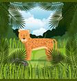 wild cheetah in the jungle scene vector image