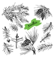 Collection with pine needles vector image