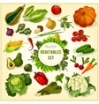 Organic fresh vegetables and herbs poster vector image