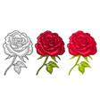 rose flower with leaf color engraving vintage vector image