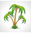 The palm trees vector image